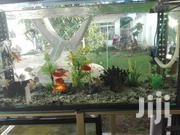 Pet Fish Available | Fish for sale in Dar es Salaam, Kinondoni