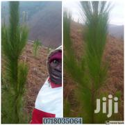 Shamba LA Miti Ya Mbao | Land & Plots For Sale for sale in Iringa, Kilolo