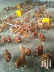 Chickens For Sale | Livestock & Poultry for sale in Tabora, Tabora Urban