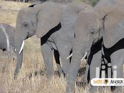 East African Safari And Touring Company That You Can Trust | Travel Agents & Tours for sale in Arusha, Arusha