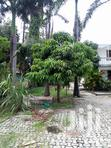 5 Bdrm House For Sale Mikocheni Sqm1500.   Houses & Apartments For Sale for sale in Kinondoni, Dar es Salaam, Tanzania