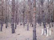 50 Acres Pine Trees For Sale | Land & Plots For Sale for sale in Iringa, Kilolo