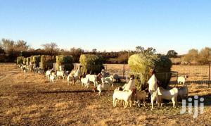 Livestock, Poultry, Ostrich, Feed For Sale