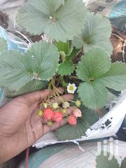 Strawberries Plants | Feeds, Supplements & Seeds for sale in Mwanza, Nyamagana