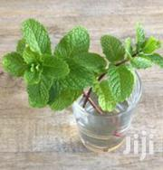 Mint Plants | Feeds, Supplements & Seeds for sale in Mwanza, Nyamagana