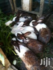 Rabbit White And Blak Mixers | Other Animals for sale in Dar es Salaam, Kinondoni