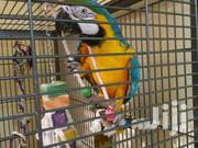 Female Macaw Parrot Available Now | Birds for sale in Dar es Salaam, Kinondoni